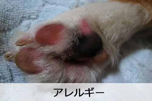 アレルギーの犬